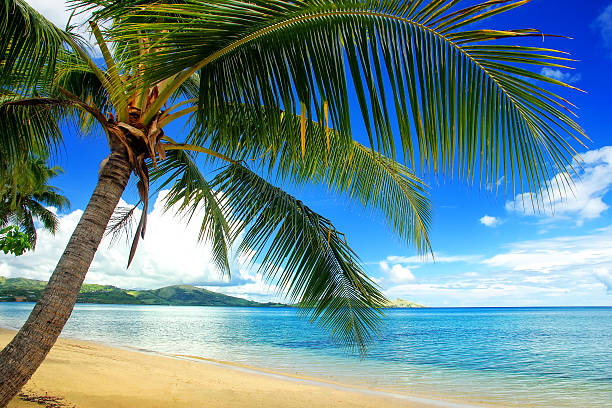 Leaning palm tree at the beach, Nananu-i-Ra island, Fiji – Foto