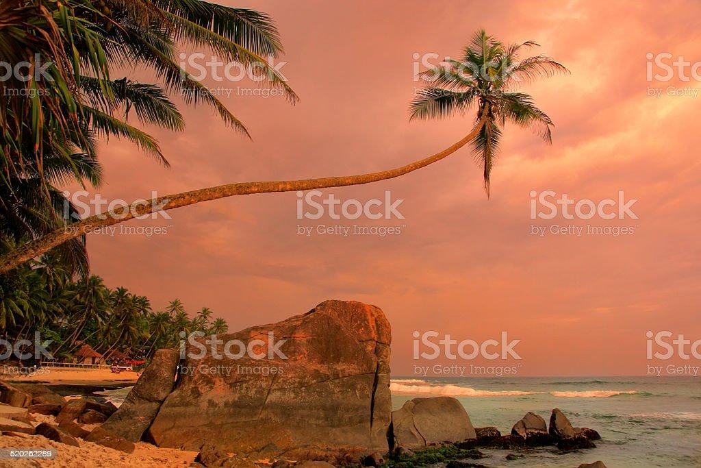 Leaning palm tree with big rocks at sunset, Unawatuna beach stock photo