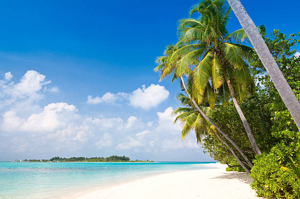 Leaning palms over white sandy beach tropical scene stock photo