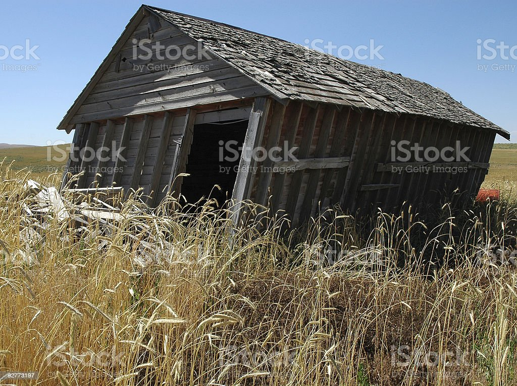 leaning shed alone in a wheat field stock photo more pictures of