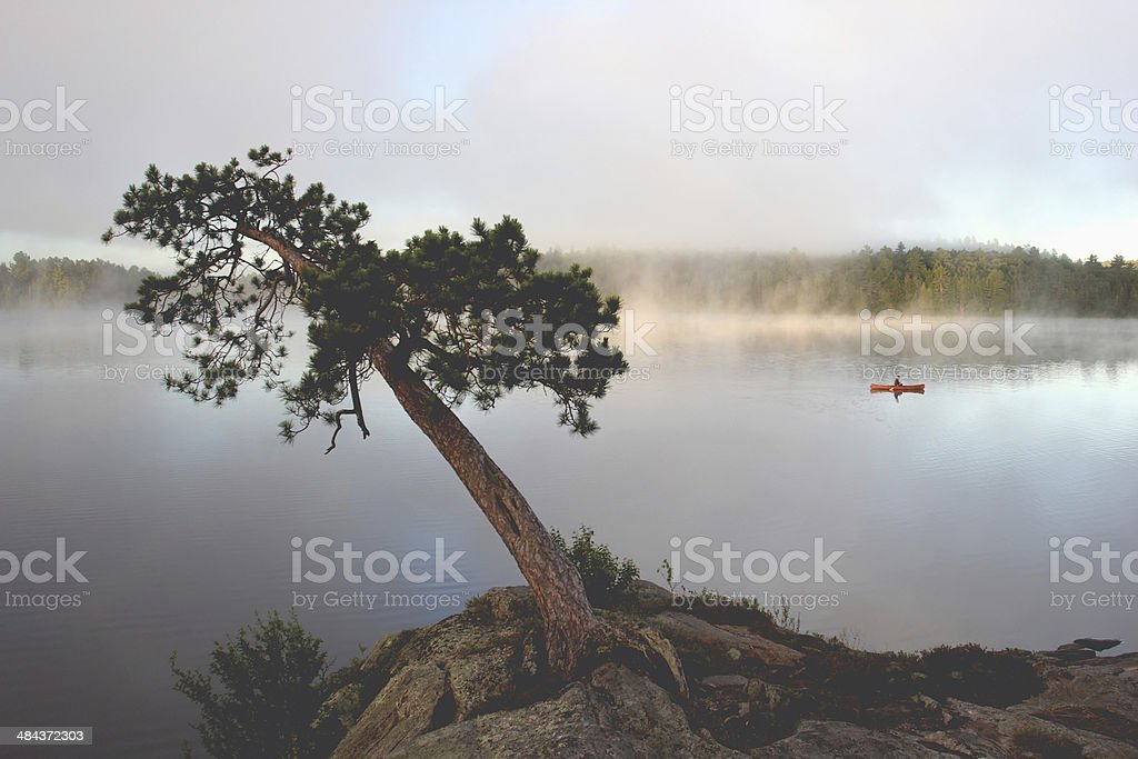 Leaning Tree by a Misty Lake stock photo