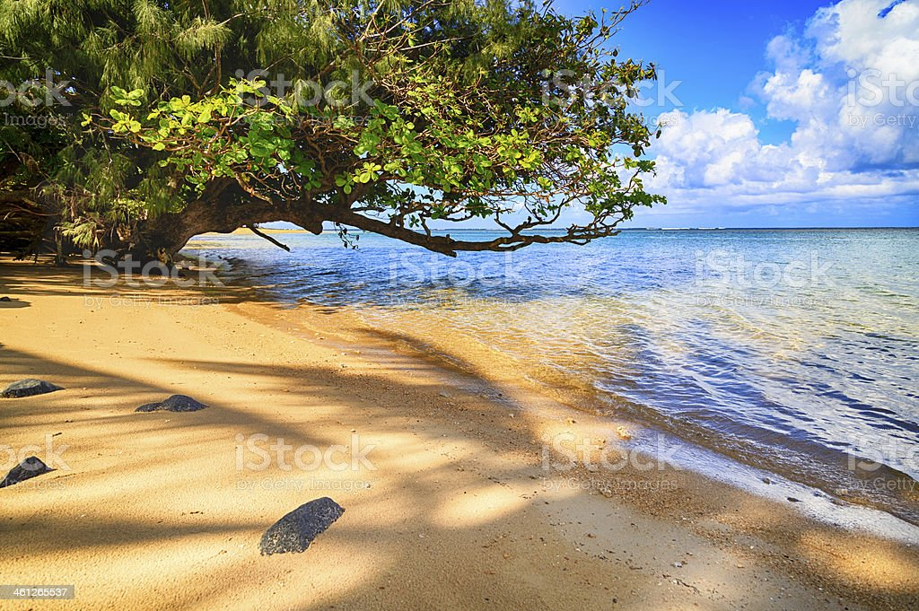 Leaning tree on a beach stock photo