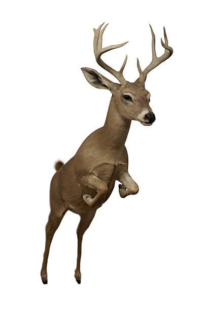 跳 deer デザイン要素 - トナカイ ストックフォトと画像