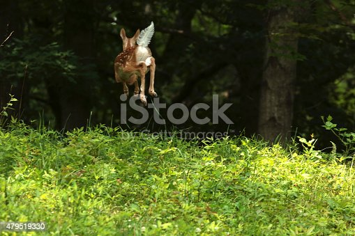 fawn, baby deer, deer, running, leaping, afraid, running away, nature, wild animal