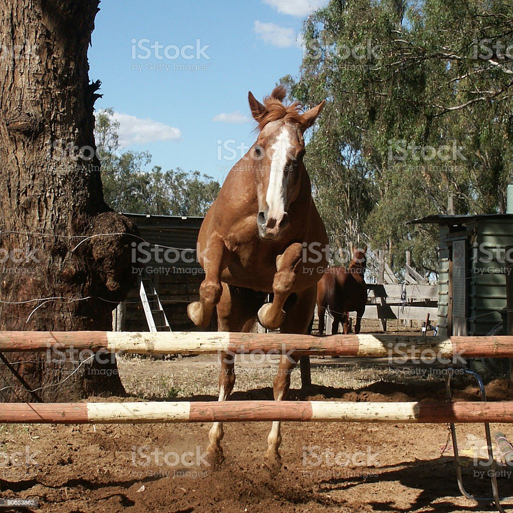 Leaping Horse royalty-free stock photo