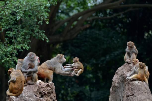 Springender Affe im Wald – Foto