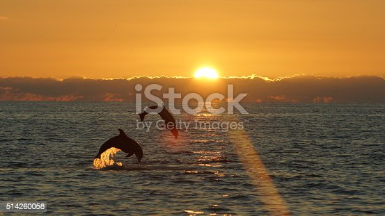 2 dolphins leaping at sunset near Sanibel Island Florida