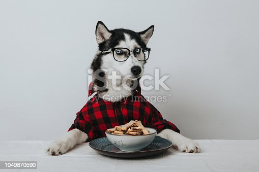 the learned dog is eating his breakfast