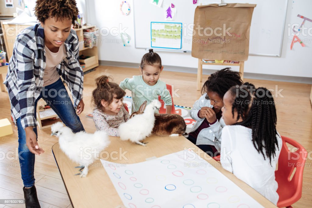 Learning about animals behavior stock photo