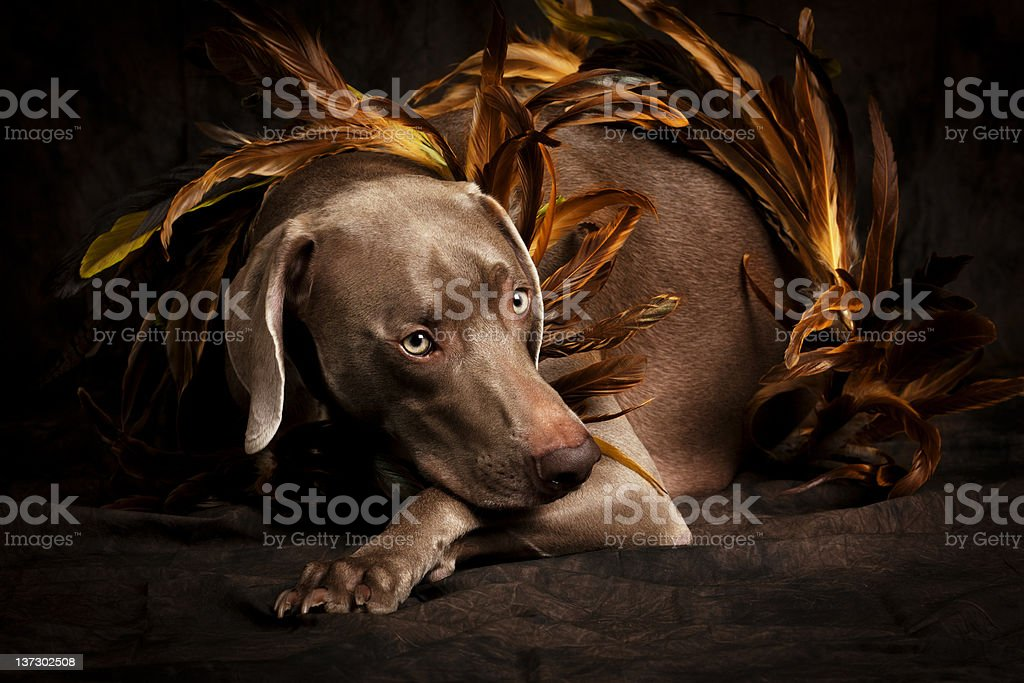 Learning to Fly royalty-free stock photo
