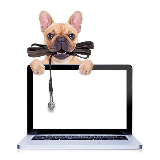 Leash dog ready for a walk picture id464772334?b=1&k=6&m=464772334&s=612x612&w=0&h=xsgbe7ukiybhxqez70qybyfgn2s46ixmop7xtkdzq5m=