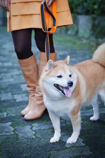 angeleinte shiba hund, hachiko statue erinnert vom japanischen frau in stiefeln - hunde strumpfhosen stock-fotos und bilder