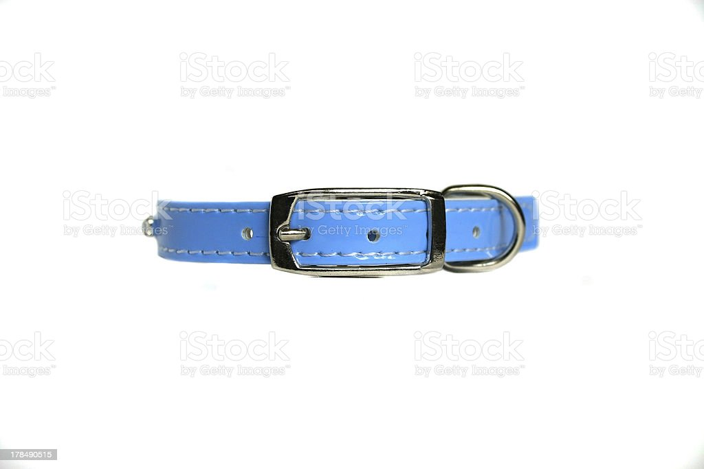 leather animal collar isolated stock photo