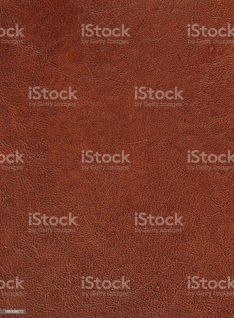 Leather Goat (65 Mp) stock photo