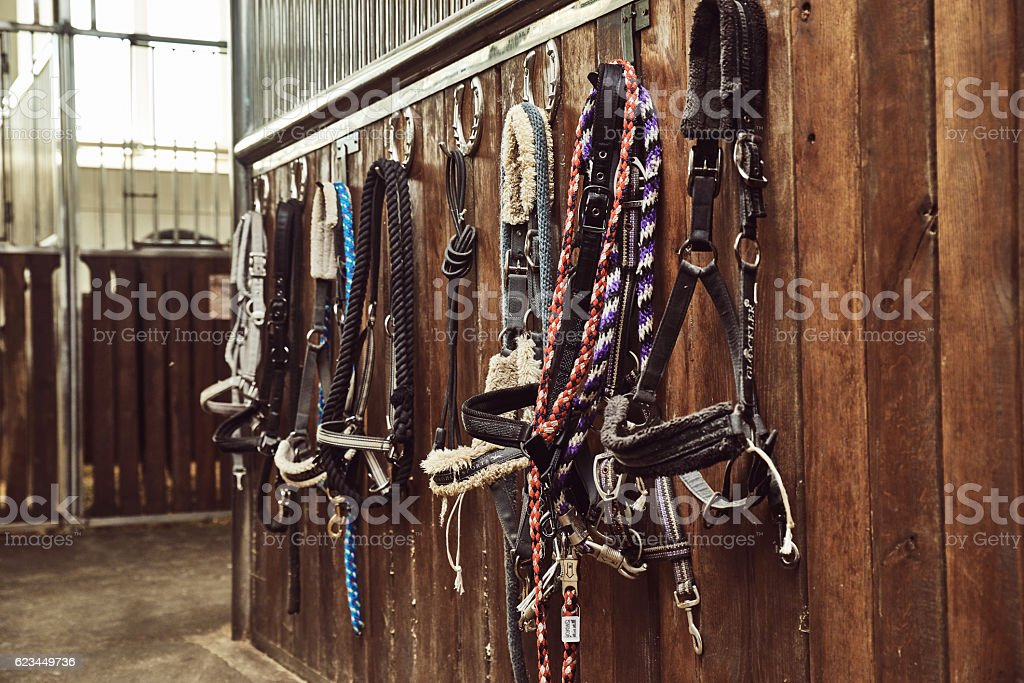 Leather horse bridles and bits hanging on wall of stable stock photo