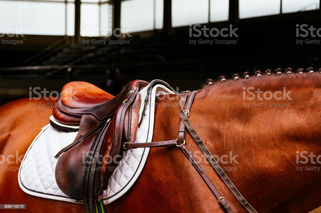 Leather saddle with the reins on a brown horse stock photo