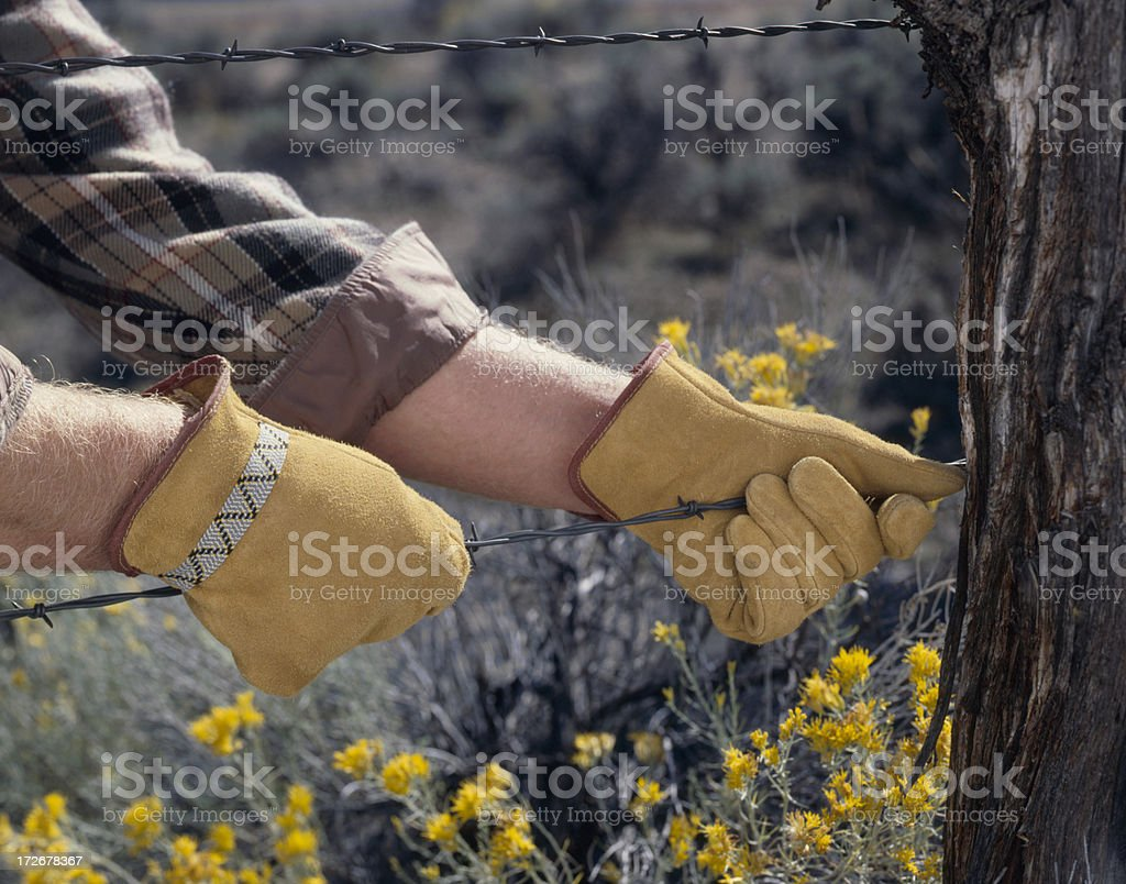Leather work gloves pulling on barbed wire stock photo