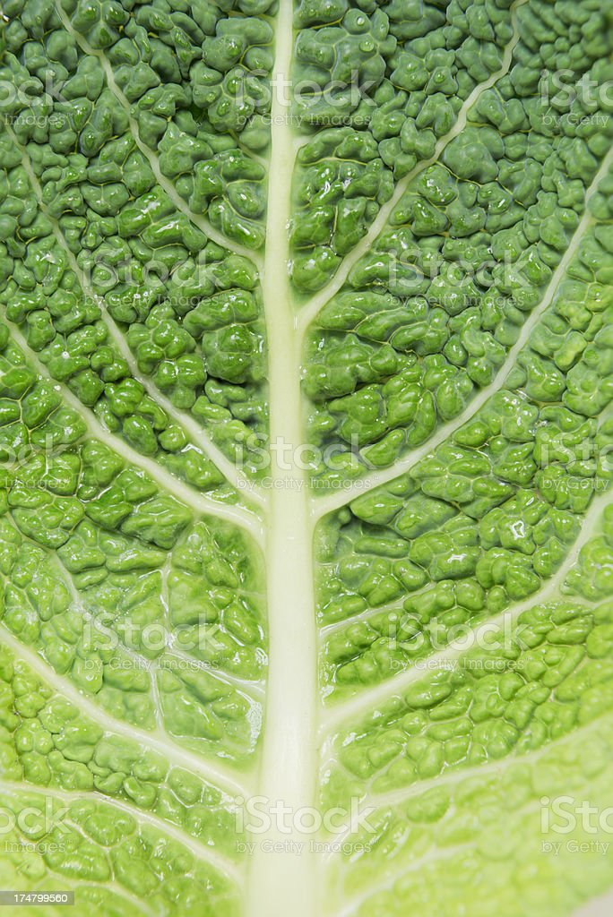 Leave of a savoy cabbage  (image size XXXL) stock photo