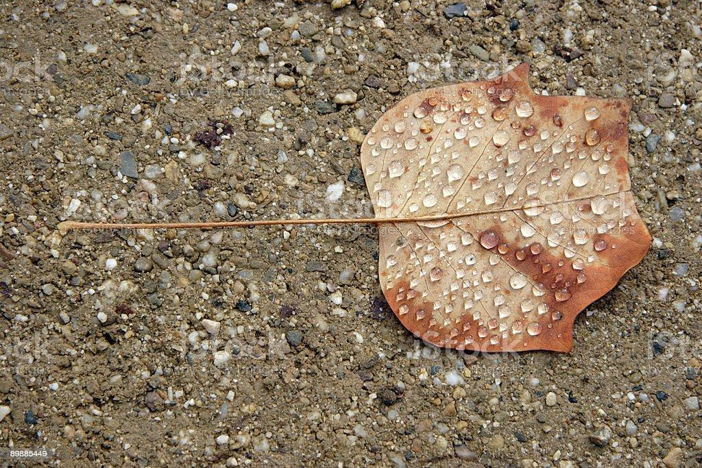 Отпуск из Магнолия голая Стоковые фото Стоковая фотография