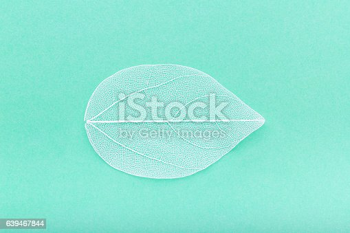 istock leave skeleton on the turquoise background 639467844