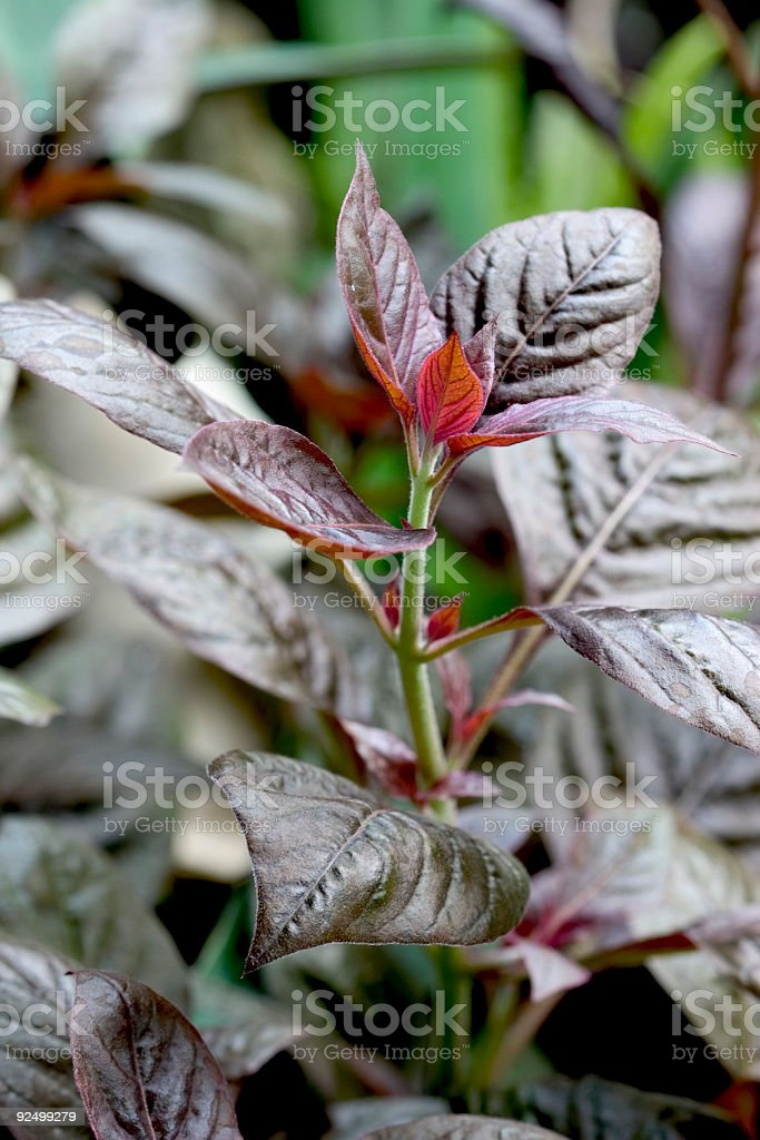 Leaves Abstract royalty-free stock photo