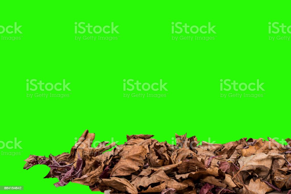 leaves against a green screen. royalty-free stock photo