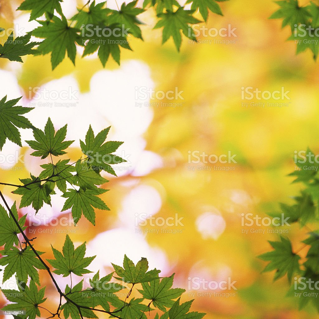 Leaves against orange background royalty-free stock photo