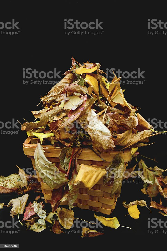 Leaves and Basket royalty-free stock photo