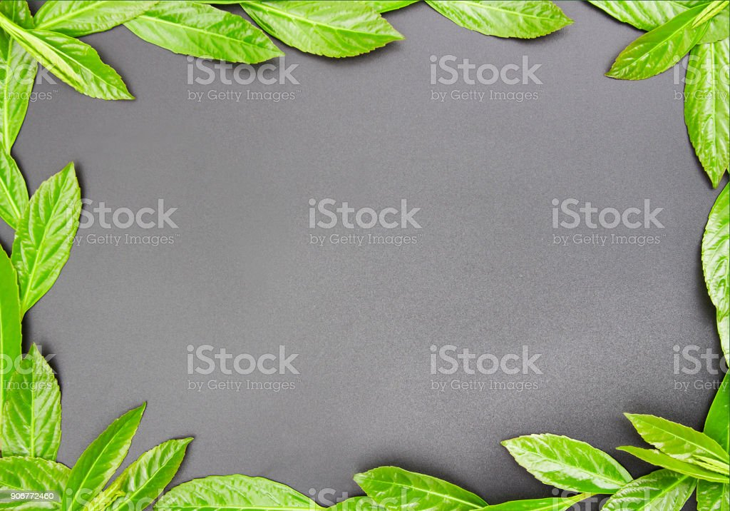 Leaves and gray background bar stock photo