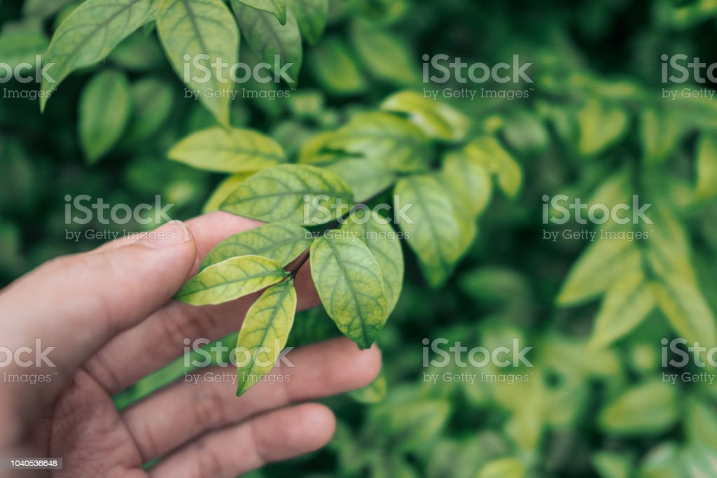 Leaves and Hand stock photo