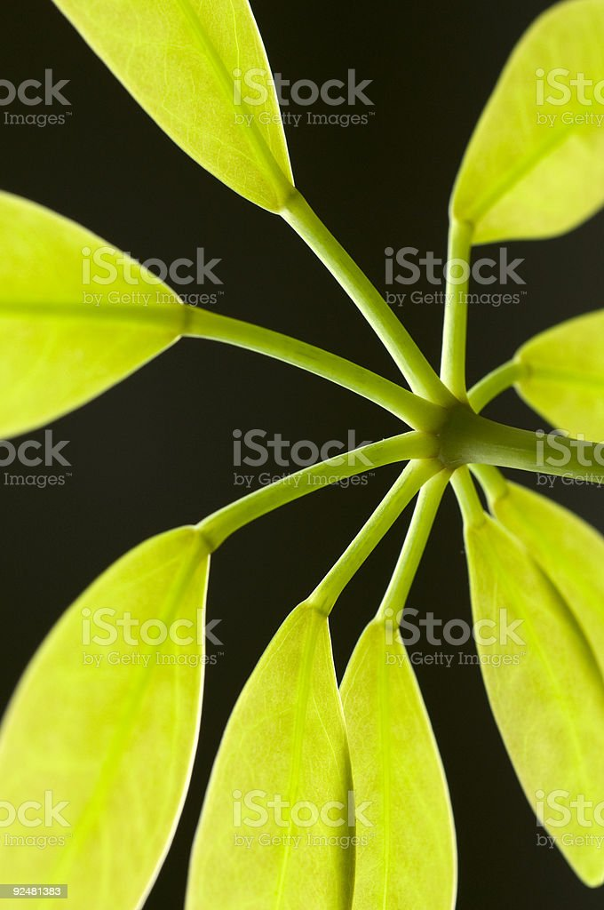Leaves and Light royalty-free stock photo