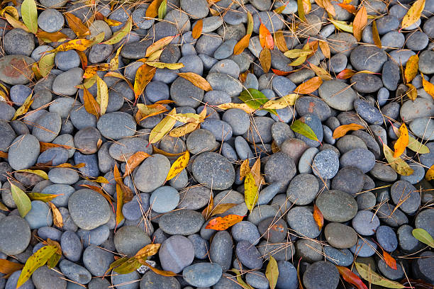 Leaves and Pebbles stock photo