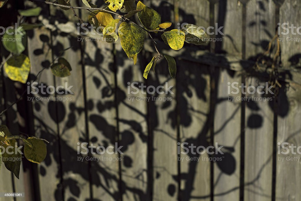 leaves and shadows royalty-free stock photo