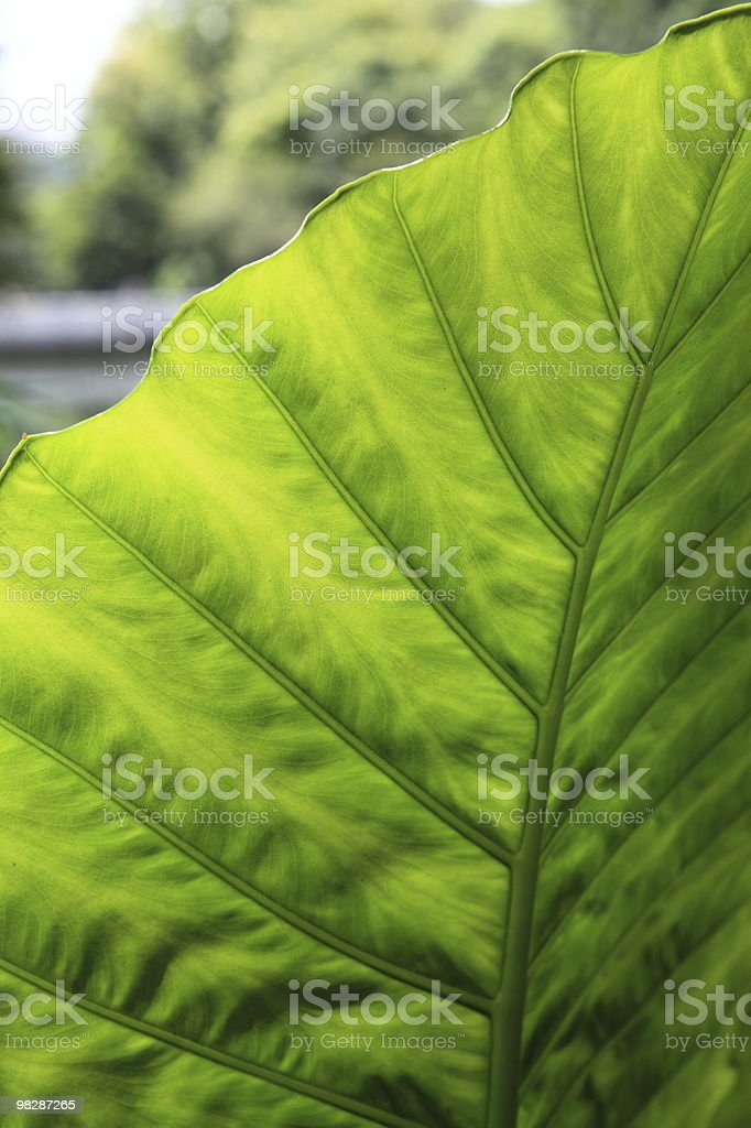 Leaves and stems royalty-free stock photo