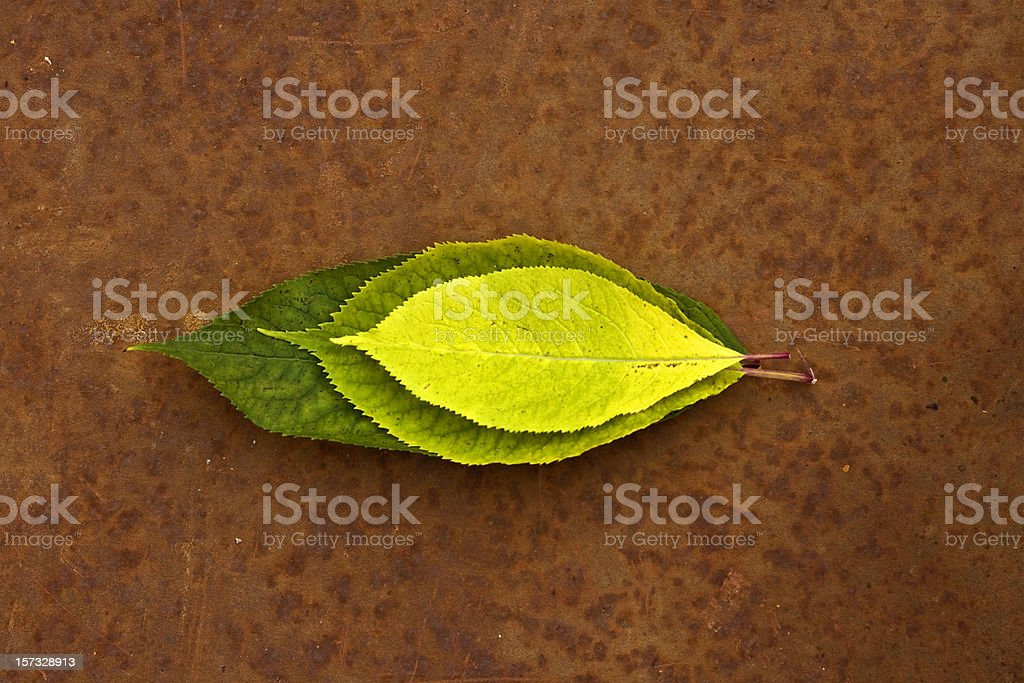 Leaves arranged on rust royalty-free stock photo