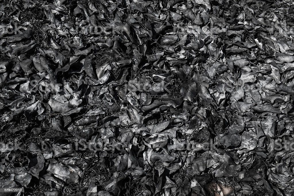 Leaves ashes, burning forest pollution ceoncepts stock photo