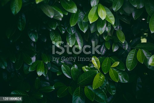 istock Leaves background 1251899624