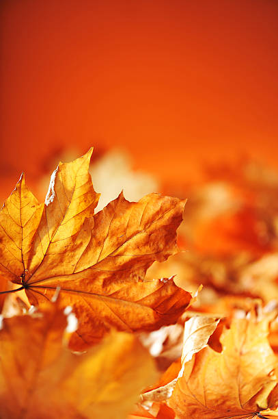 leaves background macro detail of anhydrous autumn foliage in different shades of brown and orange anhydrous stock pictures, royalty-free photos & images