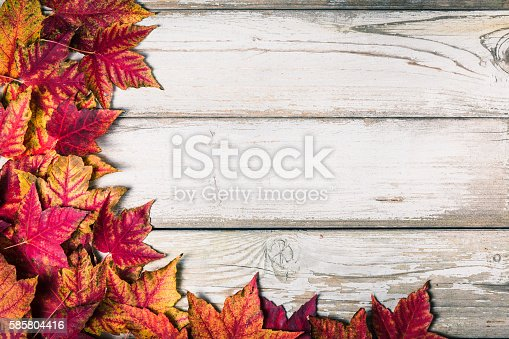 istock leaves background 585804416