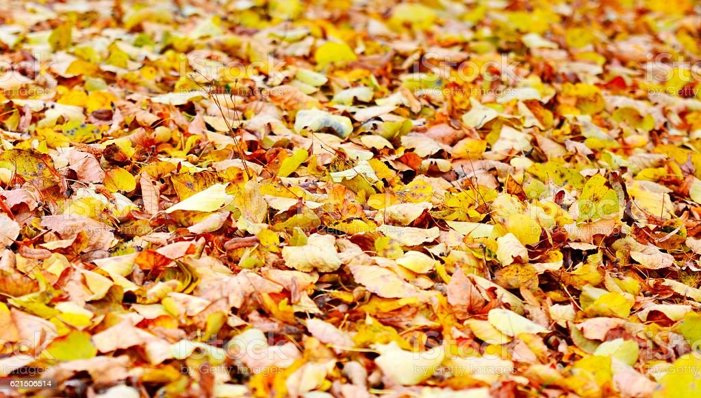 Foglie sfondo  foto stock royalty-free