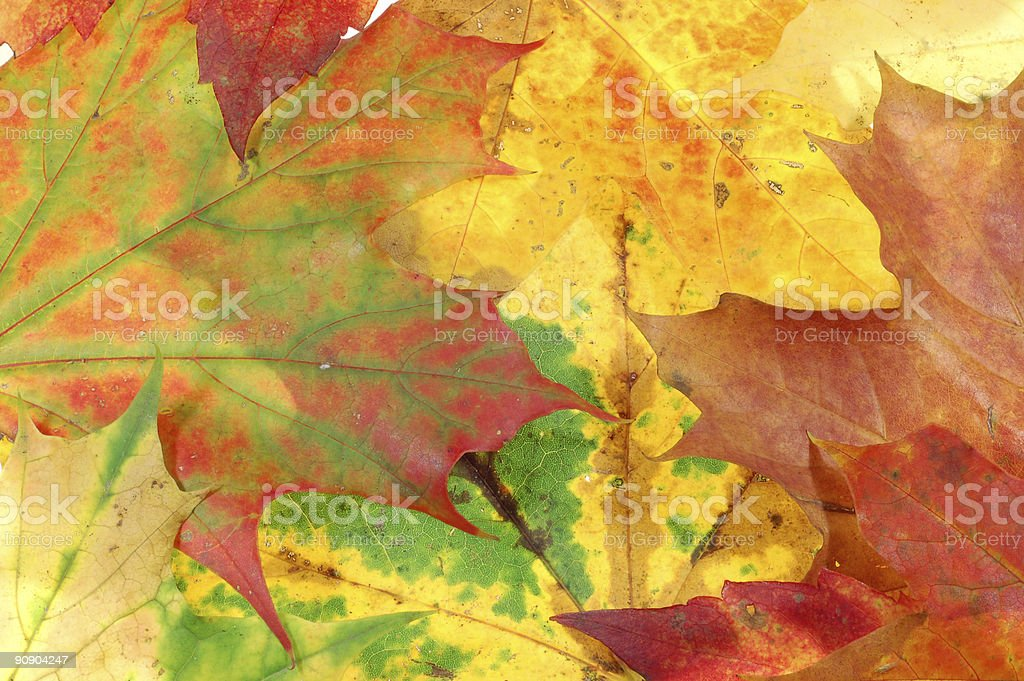 leaves background #4 royalty-free stock photo