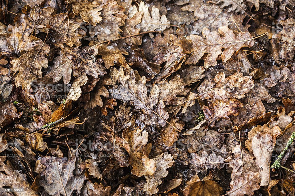 Leaves bed royalty-free stock photo