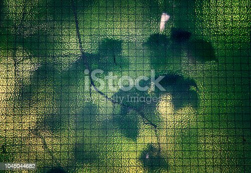 istock Leaves behind stained glass. 1045044682