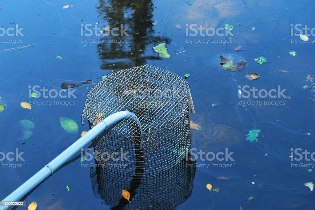 Leaves block in a pond stock photo