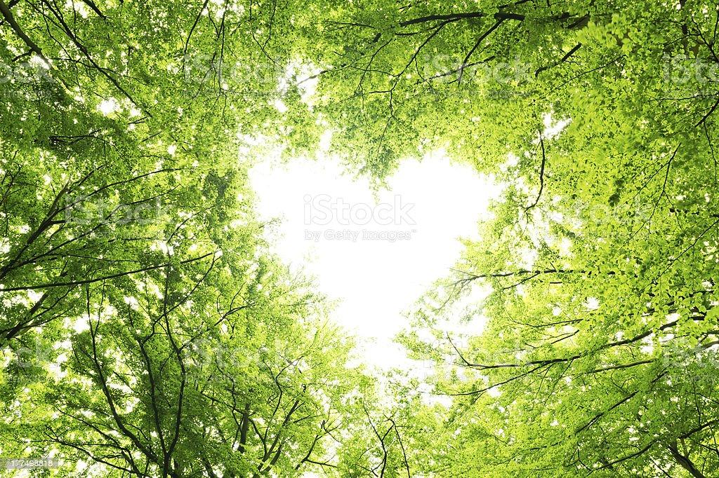 Blätter canopy Herz – Foto