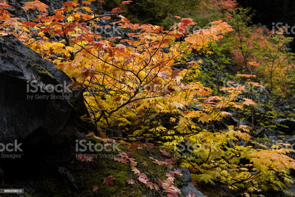 Leaves Changing Color stock photo
