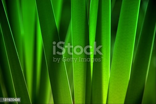 istock leaves close up 131920435