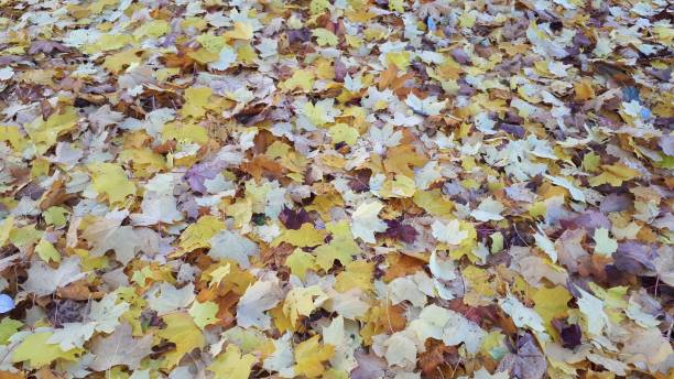 Leaves fallen on ground in Autumn stock photo