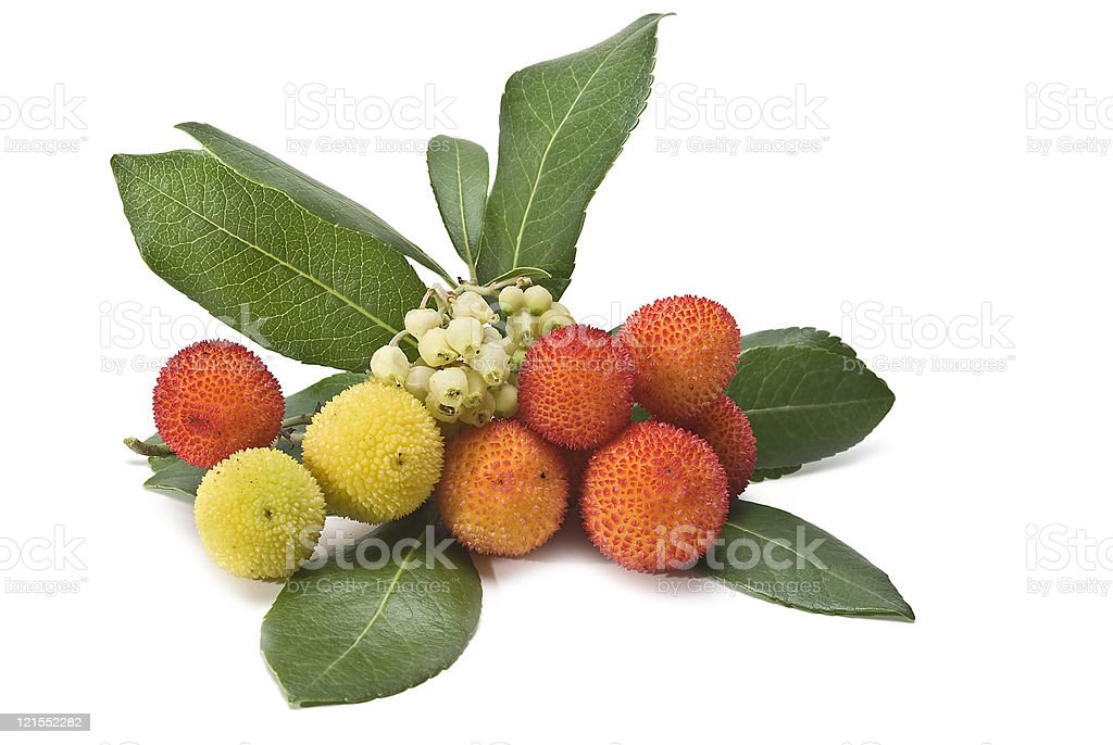Leaves, flowers and fruits. stock photo