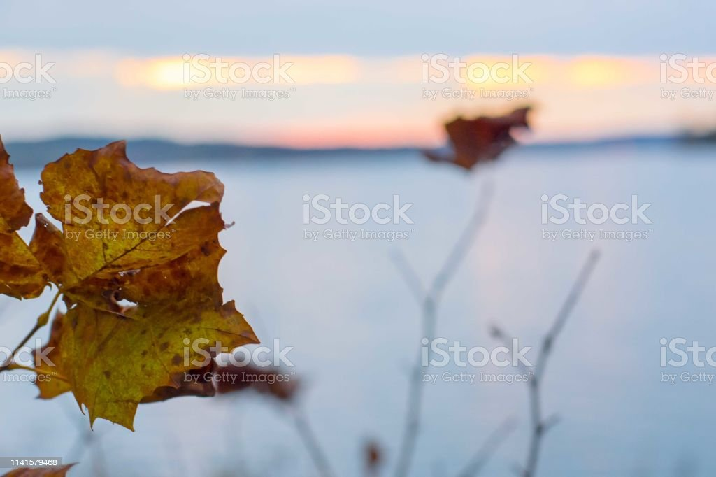 Leaves foreshadow a lake stock photo